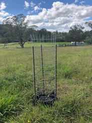 Cooler Cattle are more productive - Tree Guard Protection - Ekidna Tree Guard